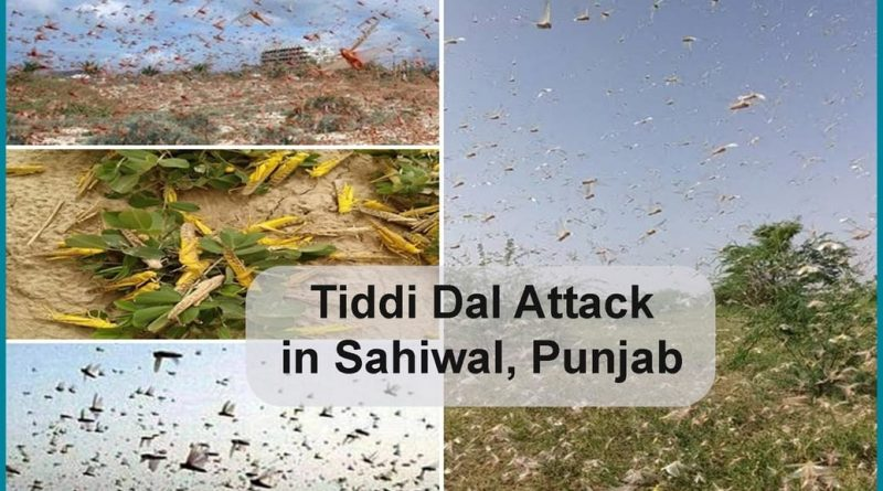 tiddi-dal-attack-in-sahiwal